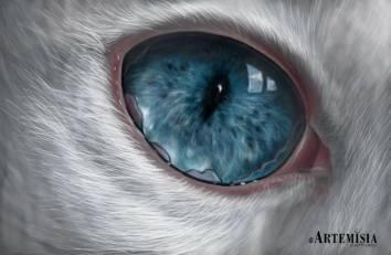 Cat eye 17x27 Digital Paint