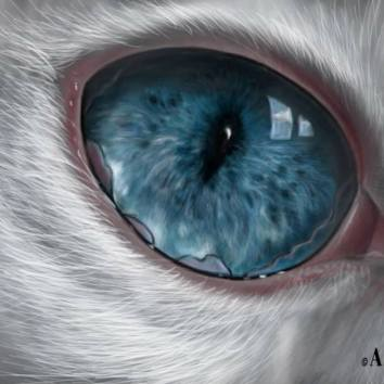 Cat eye 17x27 Digital Paint