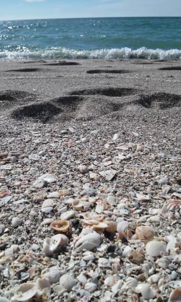beach and shells....